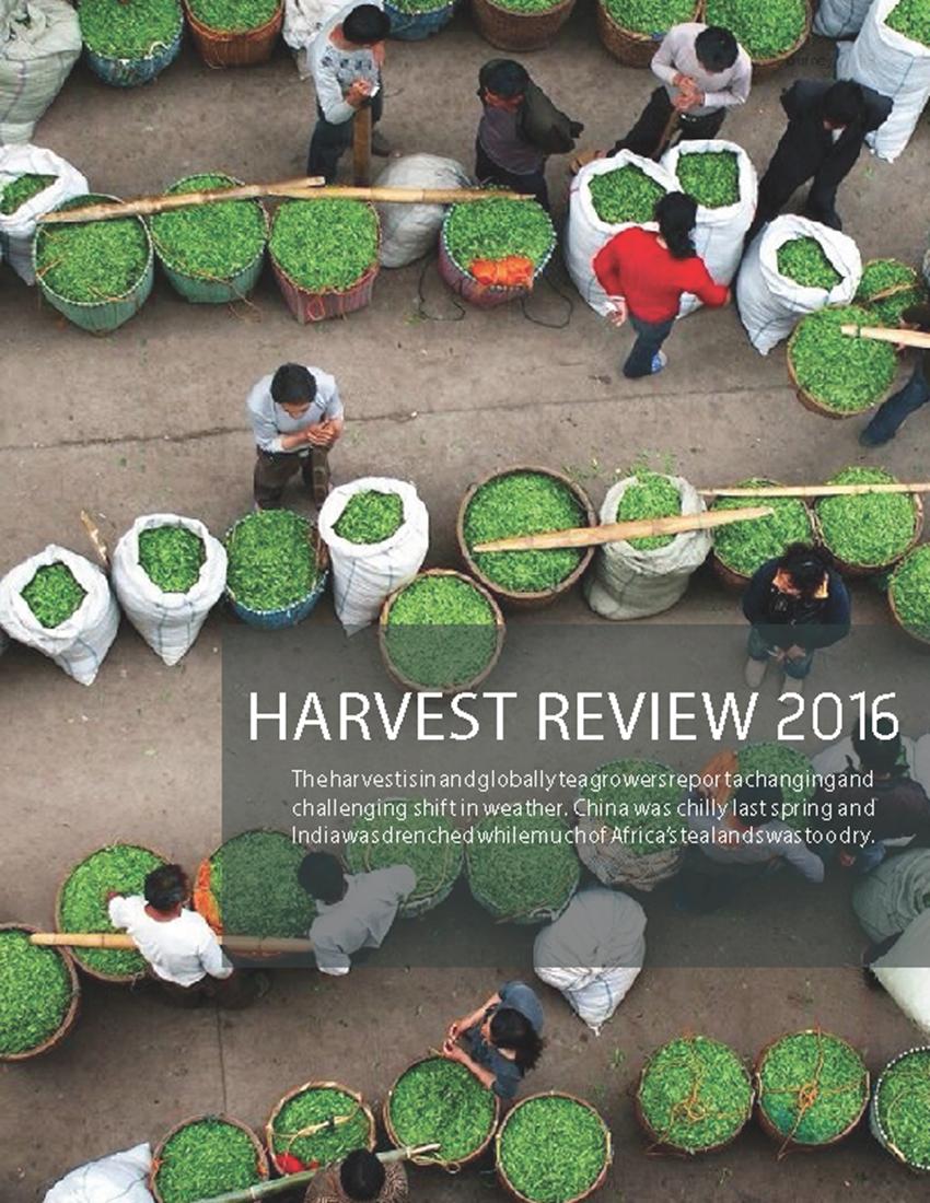 TJ2_Draft_20160829_lorez Harvest Review Cover_850px