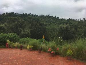 View of tea fields