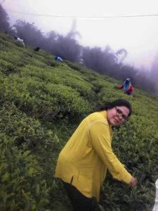 Picking in the tea fields