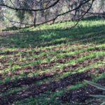 Tea Garden - the beginning