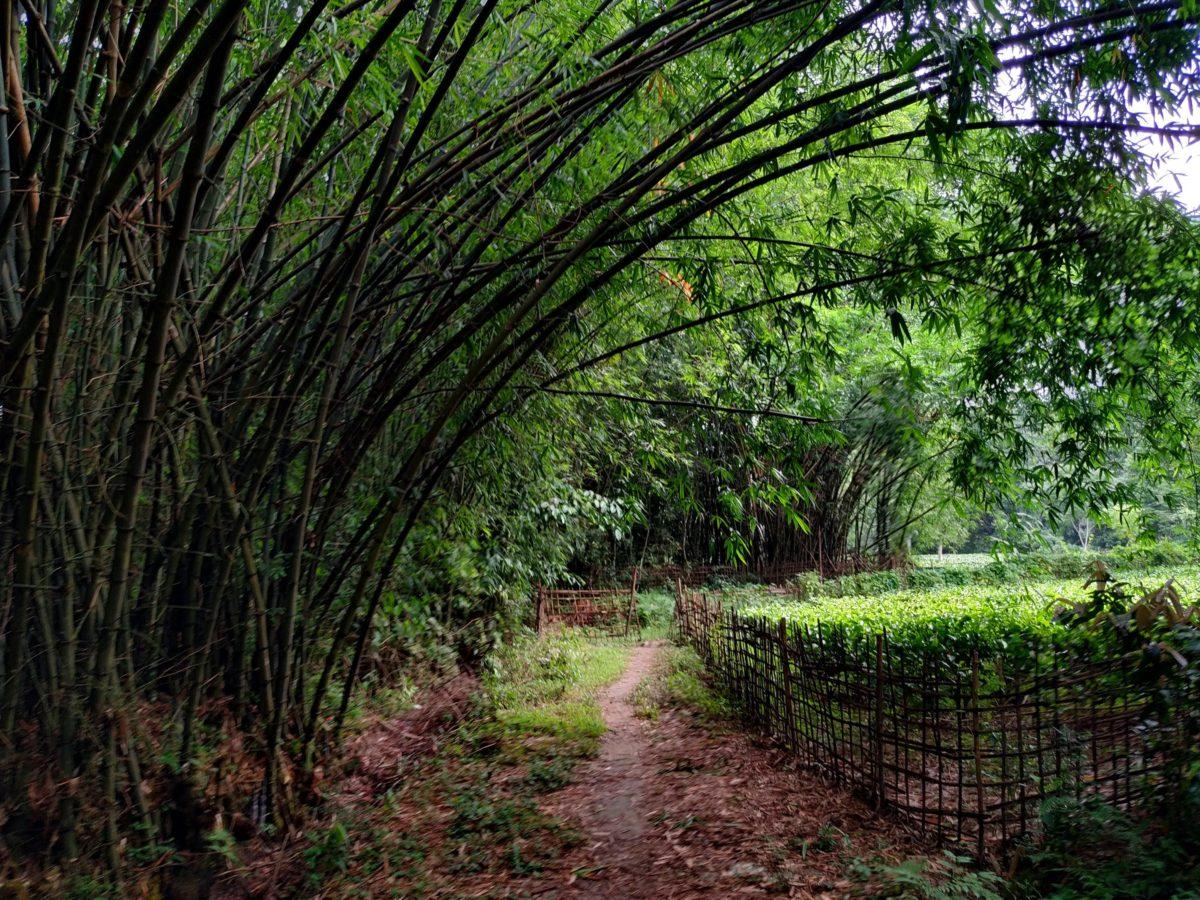 Koliapani Tea Estate
