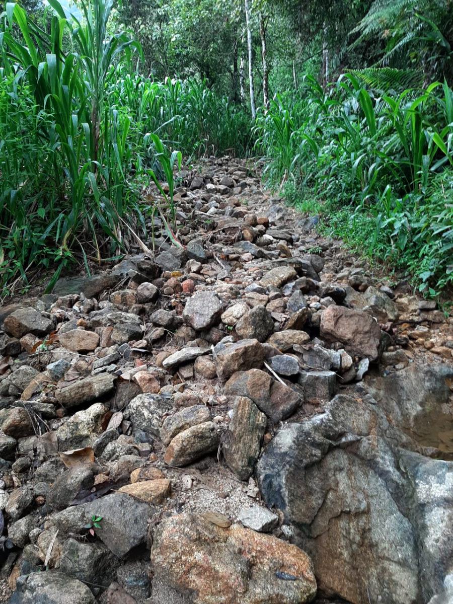 The path to the wild tea garden