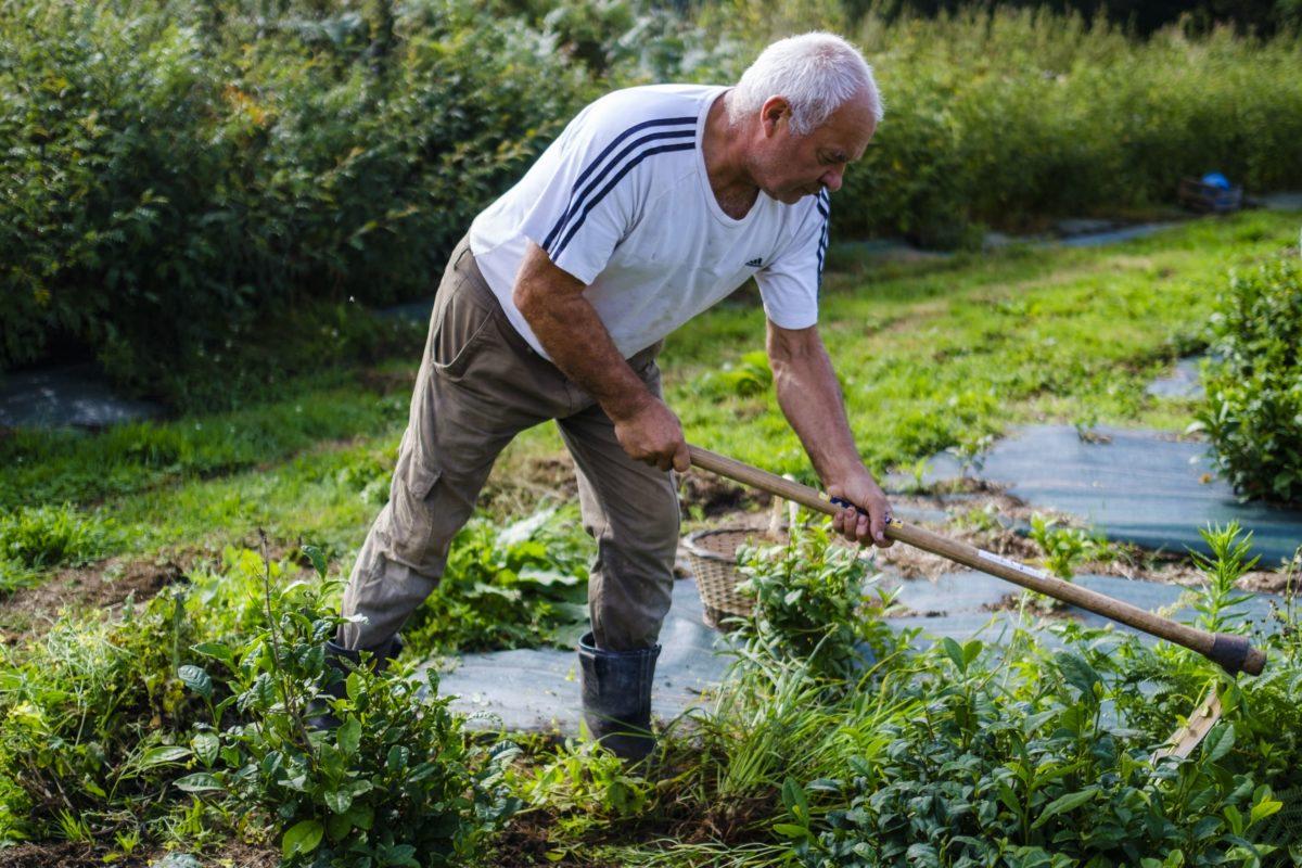 Michel Thévot, The Tea Planter
