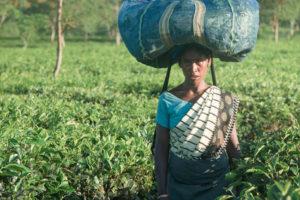 Addabarie Tea Estate, Assam, India