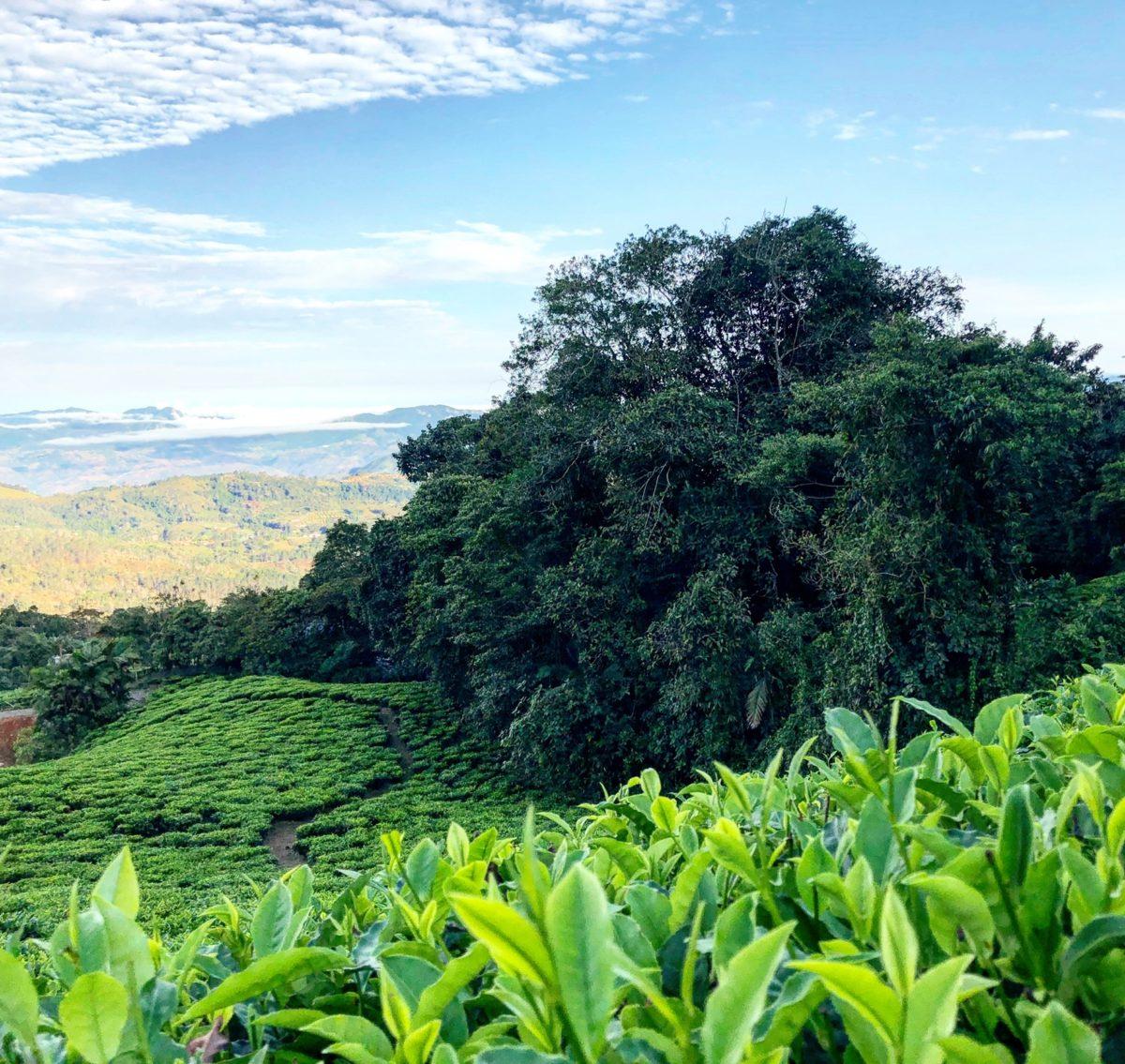 Bitaco finances reforestation providing 30,000-40,000 native trees annually.