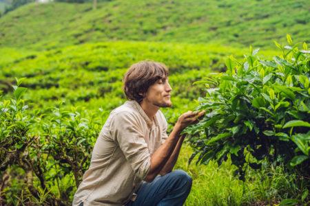 Sustainable Tea Tourism