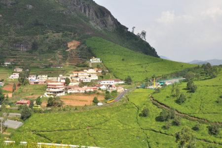 India Tea Garden