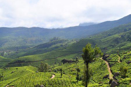 Munnar, Idukki District in Kerala, India