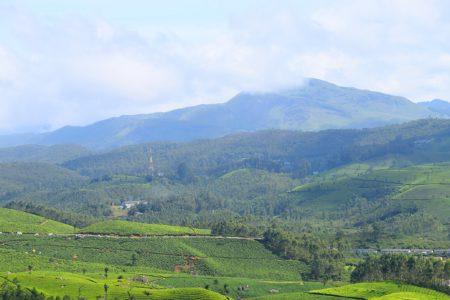 Scenic view of tea farms in Munnar, Idukki District, Kerala, India.